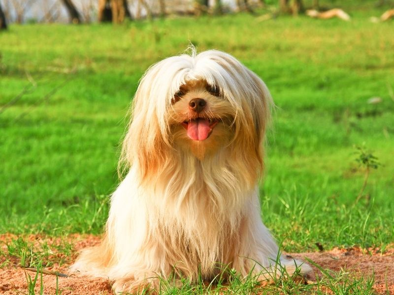 7 Ways To Make Your Backyard Dog-Friendly - cute dog sitting on patches of dirt surrounded by grass.