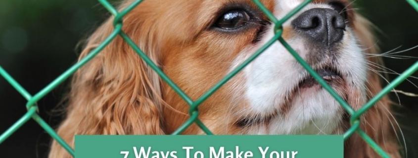 7 Ways To Make Your Backyard Dog-Friendly