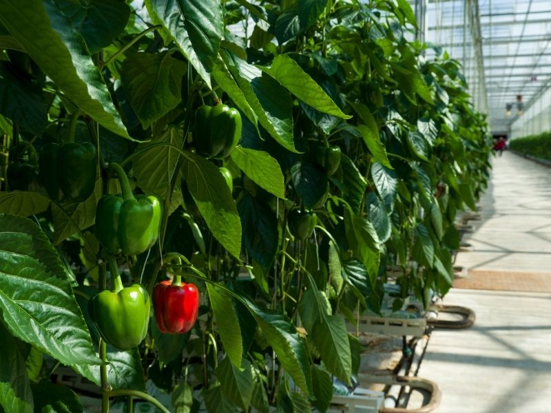 How to Build a Commercial Greenhouse