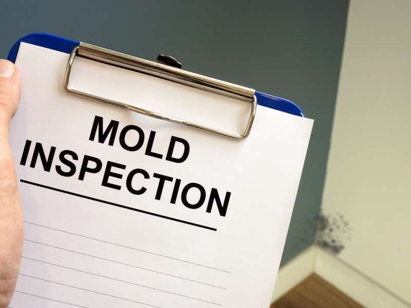 When to Seek Professional Help for Black Mold Removal