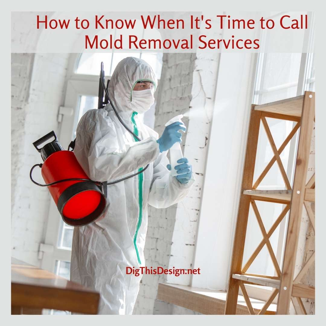 4 Signs You Need Mold Removal Services