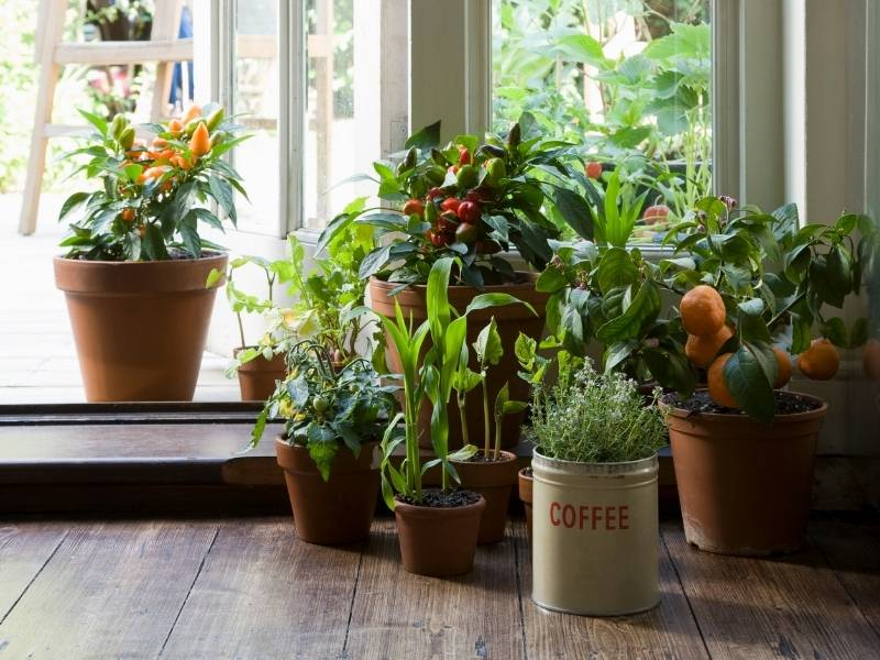 Expert Guidance to Keep Your Plants Alive - assorted house plants near patio doors.
