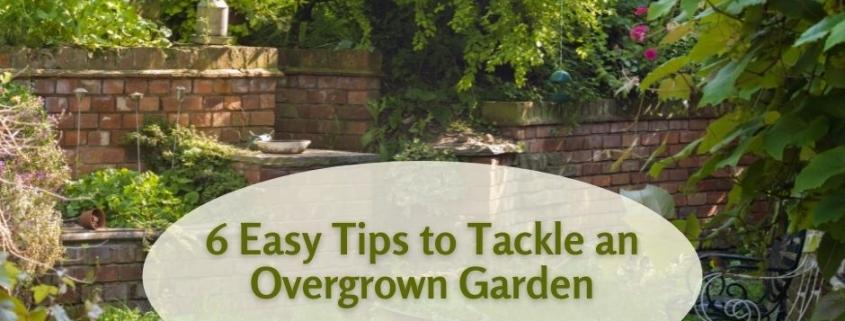 6 Easy Tips to Tackle an Overgrown Garden