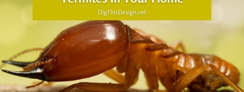 4 Top DIY Methods To Eliminate Termites In Your Home